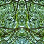 """""""ABSTRACT TREES #1 on 5 May 16"""" by nawfalnur"""