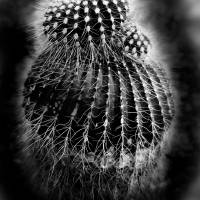 The Cactus by Patricia Schnepf