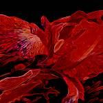 """Iris Deep Red Orange Glow"" by LyndaLehmann"