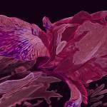 """Iris Deep Pink and Magenta Glow"" by LyndaLehmann"