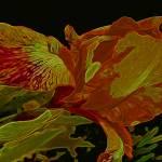 """Iris Deep Orange and Yellow Glow"" by LyndaLehmann"