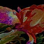 """""""Iris Deep Multicolored Glow"""" by LyndaLehmann"""