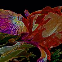Iris Deep Multicolored Glow Art Prints & Posters by Lynda Lehmann
