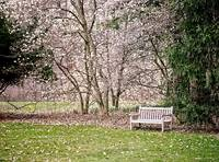 Park Bench under Magnolia Trees