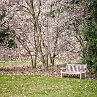 Park Bench under Magnolia Trees Art Prints & Posters by William Wetmore