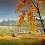 """Pasture Meadow"" by zenin"
