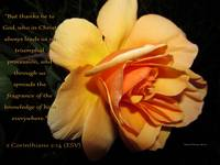 Fragrance of Christ