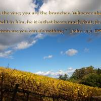 The Lord's Vineyard Art Prints & Posters by Richard Thomas