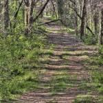 """Prairie Wood Lane"" by joannmccleeary"