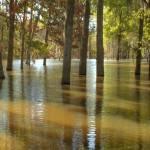 """""""lake Rayburn flood"""" by joannmccleeary"""