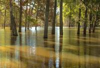 lake Rayburn flood