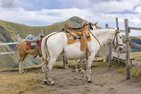 Two Horses Tied at the Top of Mountains in Quito