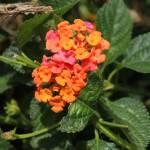"""Orange and Pink Wildflowers"" by rhamm"
