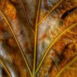 """""""Dry Leaf on 11 May 16"""" by nawfalnur"""