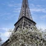 """Eiffel Tower with Magnolia Flowers"" by CoraNiele"