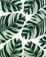 Tropical Foliage Pattern