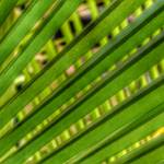 """PALM LEAF ABSTRACT"" by nawfalnur"