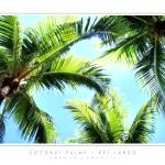 """Coconut Palms - Key Largo, FL"" by CCordelia"