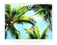 Coconut Palms - Key Largo, FL