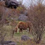 """wild pony"" by erinlanzendorfer"