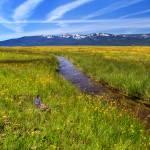 """""""Goodrich Creek"""" by jameseddy"""