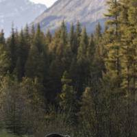 Grizzly Scape Art Prints & Posters by Thirteenth Avenue Photography