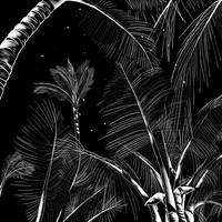 Starry Moonlit Palms (2016)
