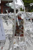 Omikuji Fortune Telling Scrolls at a Shinto Shrine