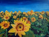 Beautiful Morning At Sunflower Fields