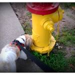 """Yellow Hydrant"" by JamesHanlon"