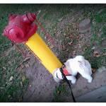 """Big Yellow Hydrant"" by JamesHanlon"