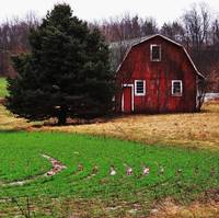 Plowed field and barn