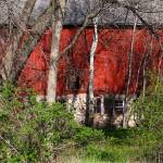 """""""Red barn being reclaimed"""" by Anewsgal"""