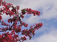 Blossoms against a spring sky