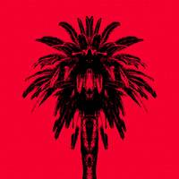 Palm Tree - Red Sky