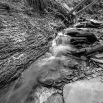 """Conklin Gully Rushing Stream in B&W"" by dbwalton"