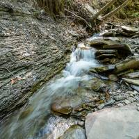 Conklin Gully Rushing Stream Art Prints & Posters by D. Brent Walton