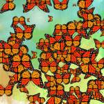 """Monarch butterflies"" by gavila"