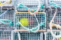 Riverport lobster traps