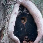 """""""Peek A Boo"""" by memoriesoflove"""