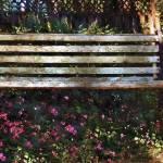 Bench in Blossom