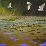 """water lilies and egrets"" by rchristophervest"