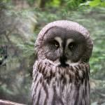 """Owl"" by HeatherMaryAnn"