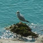"""Birdy"" by HarusPhotos"