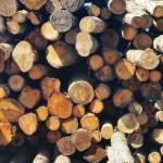 """Wood Pile"" by KPphotography"
