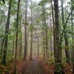 """Autumn Walk"" by KPphotography"