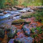 """smoky mountain creek"" by KPphotography"