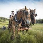 """Draft Horses and Wagon"" by SederquistPhotography"