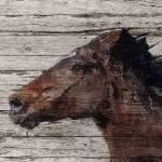 """""""Running Wild Horse"""" by Aneri"""