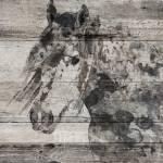 """Dark Grey Horse"" by Aneri"